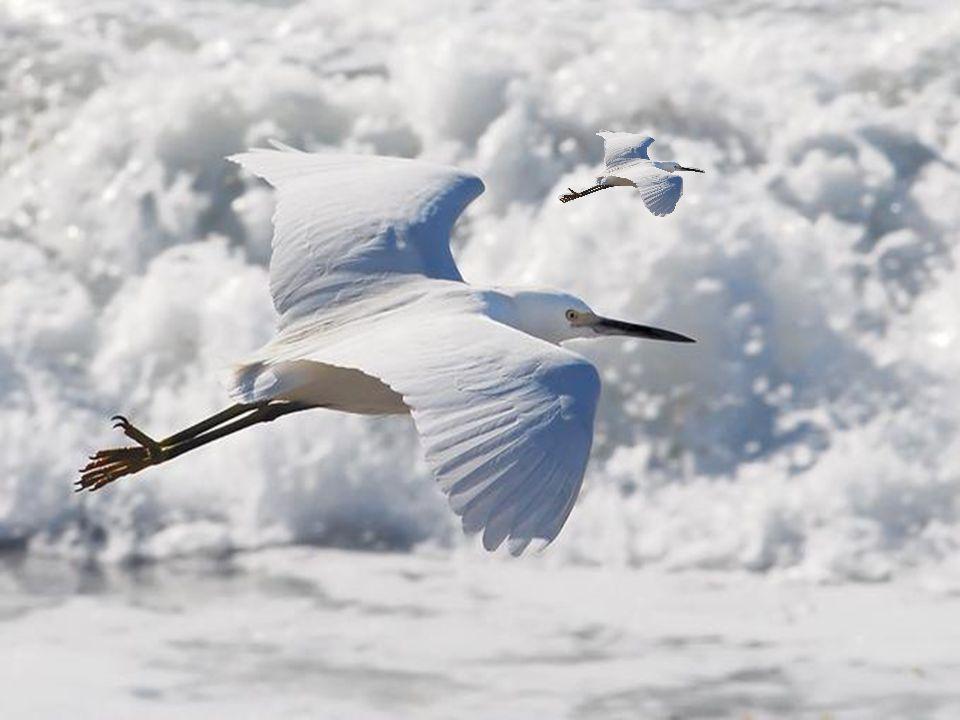 Il faut énormément de volonté parfois. Si l'imagination est fertile vous pouvez voir ce petit oisillon s'envoler vers le ciel les ailes déployées… Il