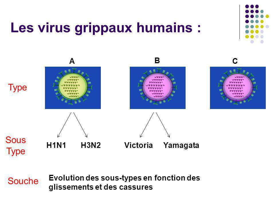 Les dernières pandémies