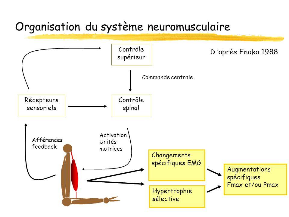 Organisation du système neuromusculaire Contrôle supérieur Contrôle spinal Activation Unités motrices Afférences feedback Commande centrale Récepteurs