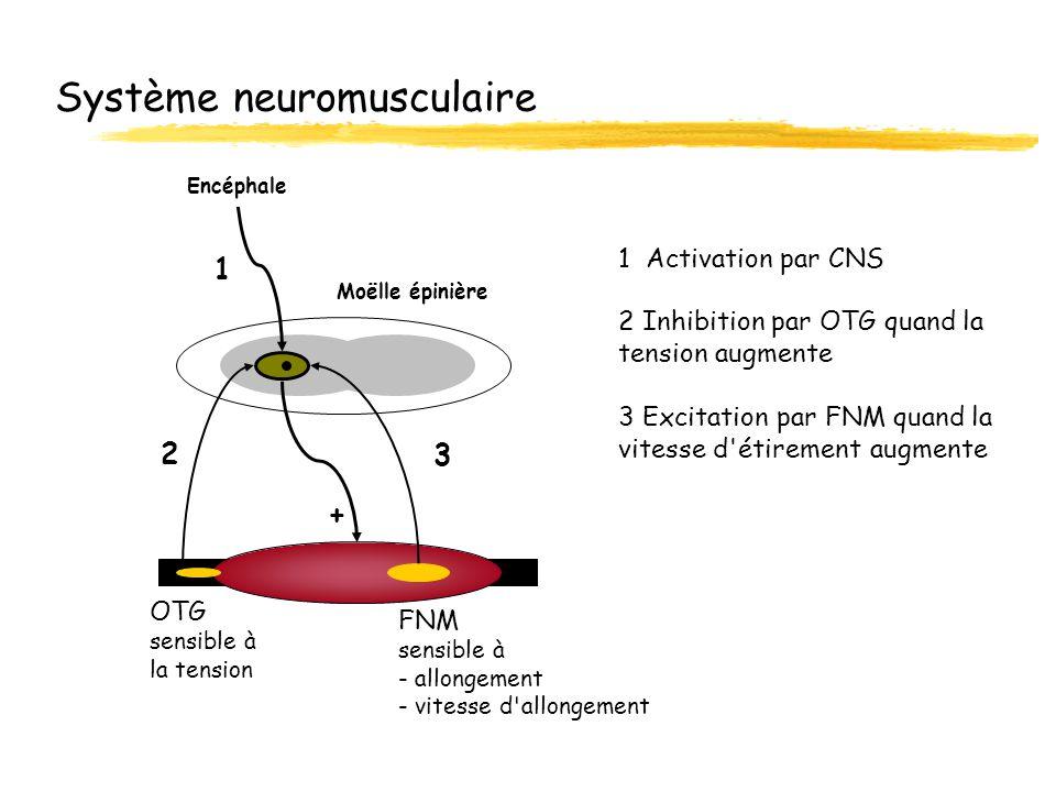 Système neuromusculaire Moëlle épinière Encéphale OTG sensible à la tension FNM sensible à - allongement - vitesse d'allongement + 1 2 3 1 Activation