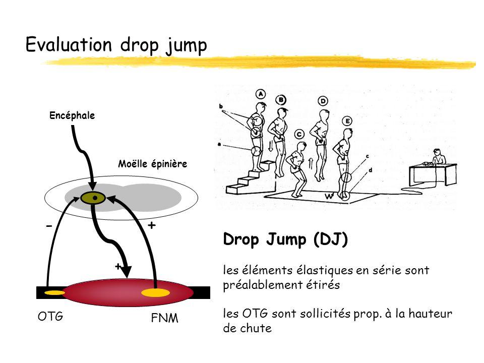 Evaluation drop jump Drop Jump (DJ) les éléments élastiques en série sont préalablement étirés les OTG sont sollicités prop. à la hauteur de chute OTG