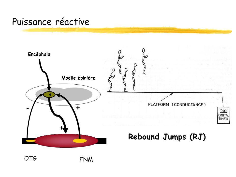 Puissance réactive Rebound Jumps (RJ) OTG FNM Moëlle épinière Encéphale + -+