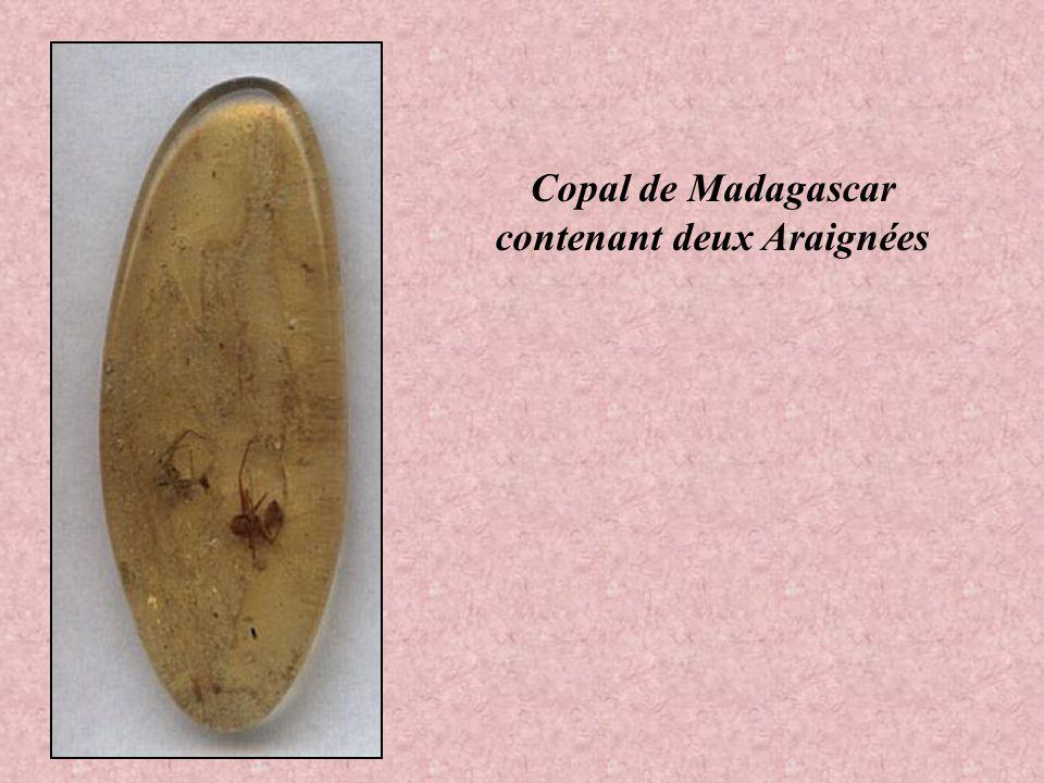 Echantillon de Copal de Madagascar