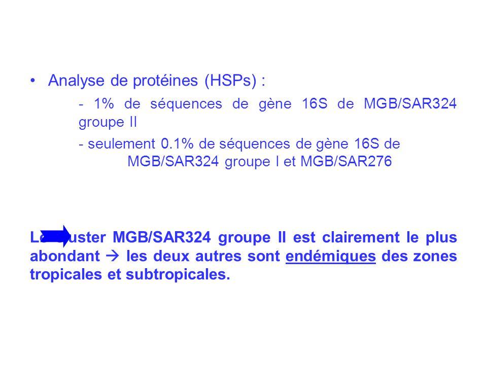 Analyse de protéines (HSPs) : - 1% de séquences de gène 16S de MGB/SAR324 groupe II - seulement 0.1% de séquences de gène 16S de MGB/SAR324 groupe I et MGB/SAR276 Le cluster MGB/SAR324 groupe II est clairement le plus abondant les deux autres sont endémiques des zones tropicales et subtropicales.