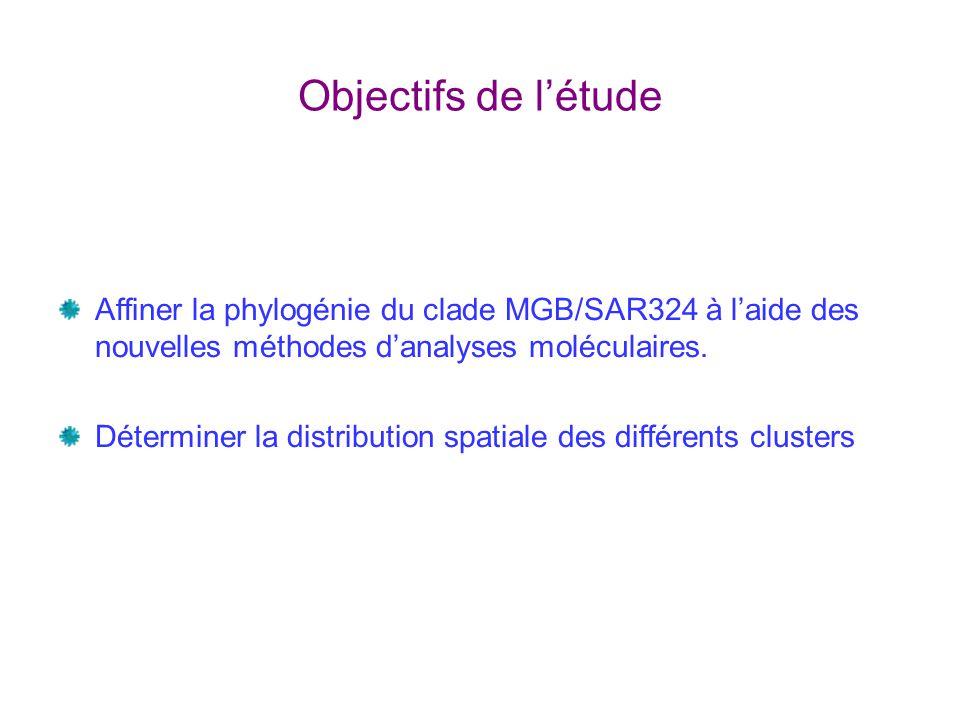 Objectifs de létude Affiner la phylogénie du clade MGB/SAR324 à laide des nouvelles méthodes danalyses moléculaires.