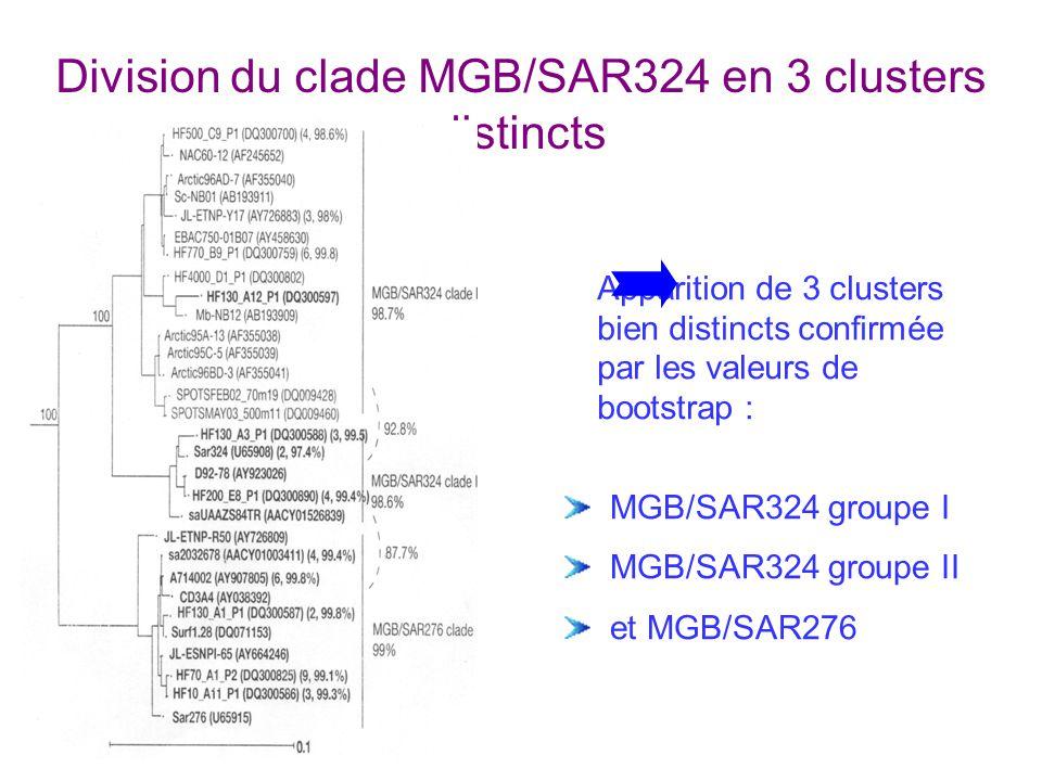 Division du clade MGB/SAR324 en 3 clusters distincts Apparition de 3 clusters bien distincts confirmée par les valeurs de bootstrap : MGB/SAR324 groupe I MGB/SAR324 groupe II et MGB/SAR276