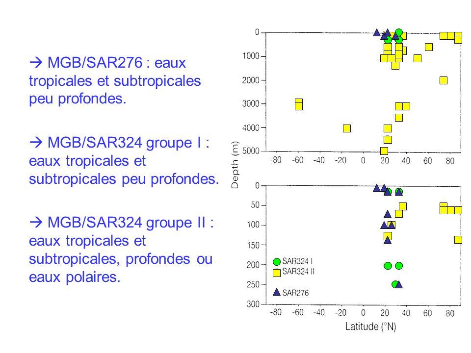 MGB/SAR276 : eaux tropicales et subtropicales peu profondes.