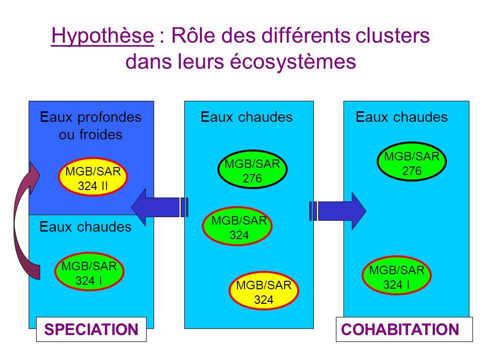 Hypothèse : Rôle des différents clusters dans leurs écosystèmes Eaux chaudesEaux profondes ou froides Eaux chaudes SPECIATIONCOHABITATION MGB/SAR 276 MGB/SAR 324 I MGB/SAR 324 II MGB/SAR 324 MGB/SAR 324 I MGB/SAR 276