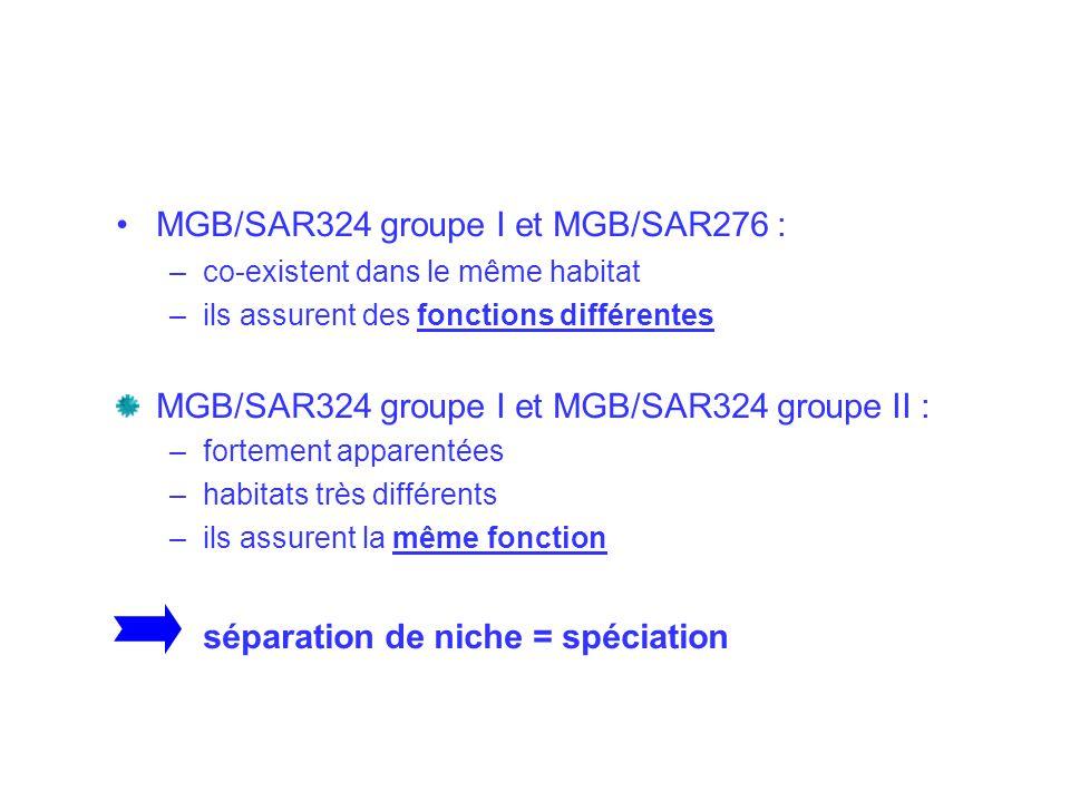 Hypothèse : Température = moteur de spéciation de MGB/SAR324 groupe II.
