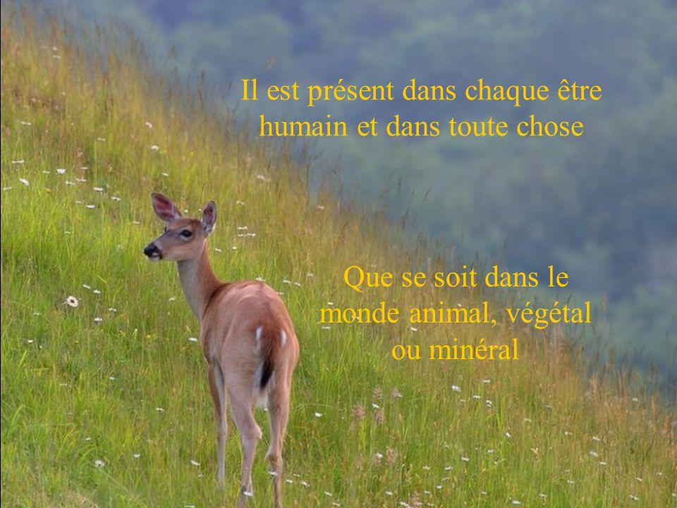 Il est présent dans chaque être humain et dans toute chose Que se soit dans le monde animal, végétal ou minéral