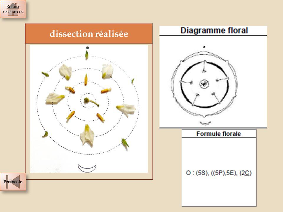 dissection réalisée Retour ressources Retour ressources Protocole