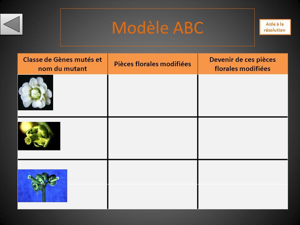 A nimation flash Contrôle génétique de lorganisation florale: le modèle ABC http://www.ens-lyon.fr/RELIE/Fleurs/formation/module4/demo-m4-1.htm http:/