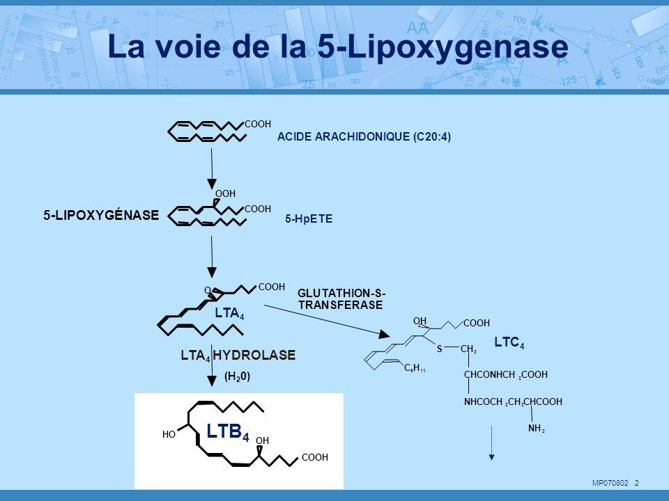 MP070802 3 OH COOH HO OH C 5 H 11 SCH 2 COOH CHCONHCH 2 COOH NHCOCH 2 CH 2 CHCOOH NH 2 LEUCOTRIÈNE B 4 (LTB 4 ) -Activation & Chimiotaxisme des phagocytes LEUCOTRIÈNE C 4 -Constriction des muscles lisses du tract respiratoire - Augmente la permeabilité vasculaire Activités biologiques des leucotriènes (LTC 4 )