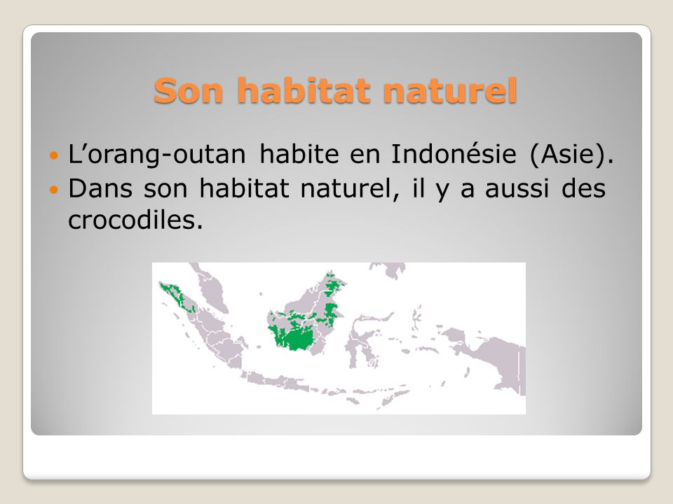 Son habitat naturel Lorang-outan habite en Indonésie (Asie). Dans son habitat naturel, il y a aussi des crocodiles.