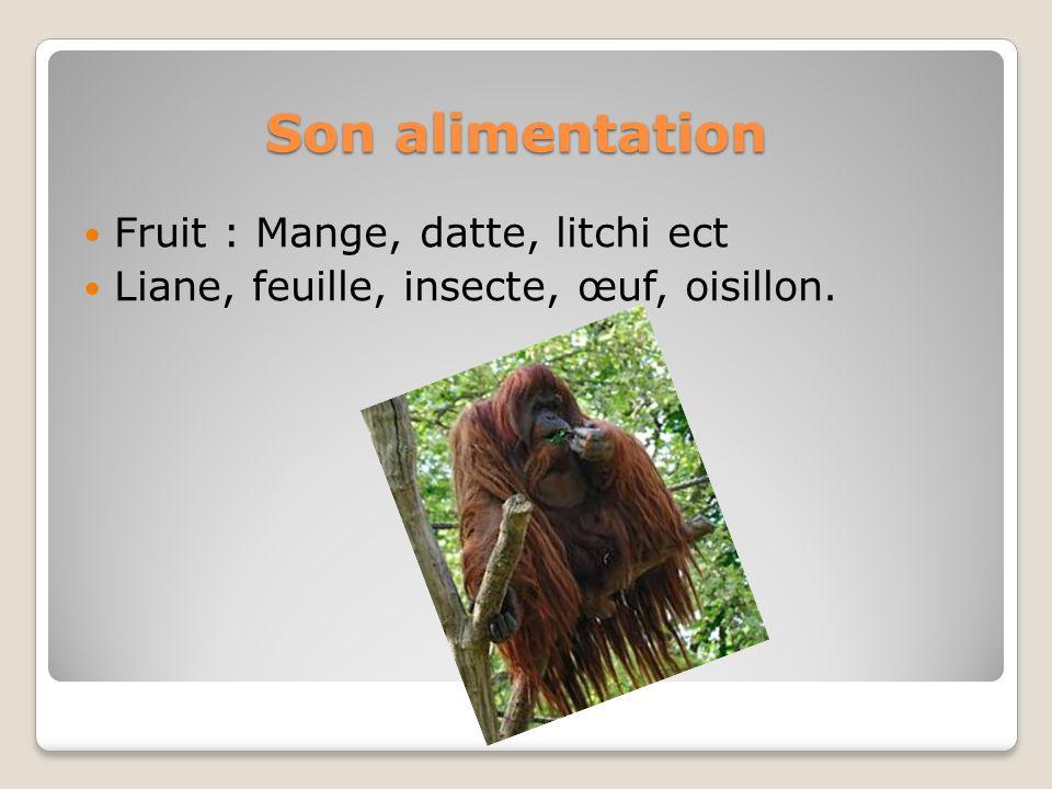 Son alimentation Fruit : Mange, datte, litchi ect Liane, feuille, insecte, œuf, oisillon.