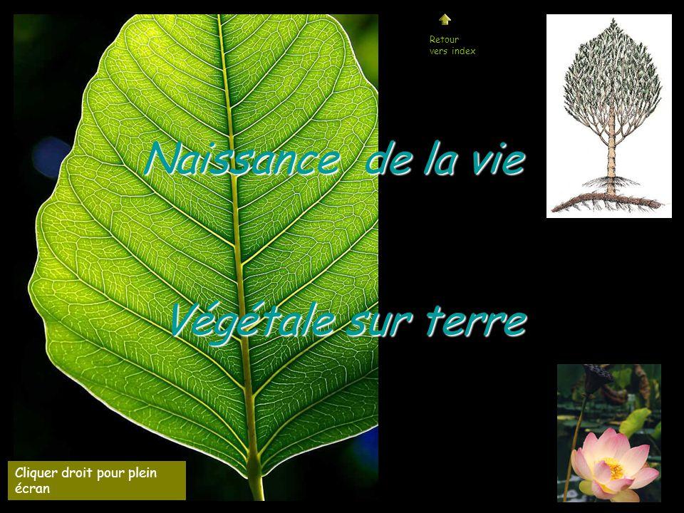 Naissance de la vie Végétale sur terre Cliquer droit pour plein écran Retour vers index