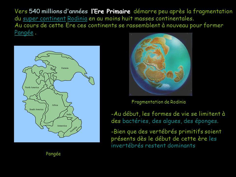 Vers 540 millions d'années lEre Primaire démarre peu après la fragmentation du super continent Rodinia en au moins huit masses continentales. Au cours