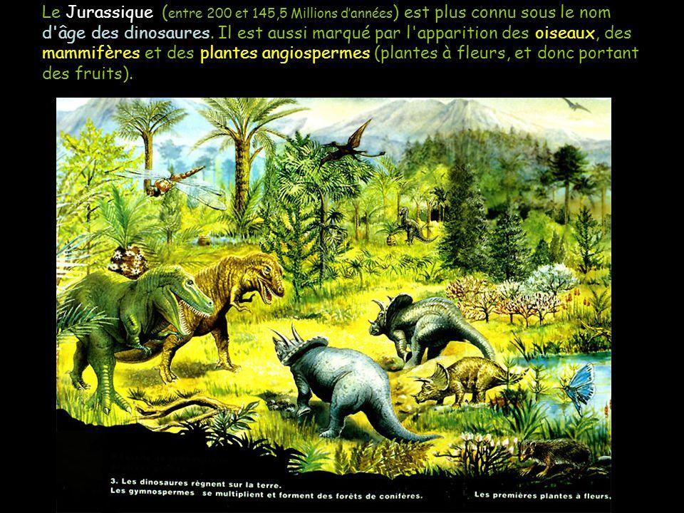 Le Jurassique ( entre 200 et 145,5 Millions dannées ) est plus connu sous le nom d'âge des dinosaures. Il est aussi marqué par l'apparition des oiseau