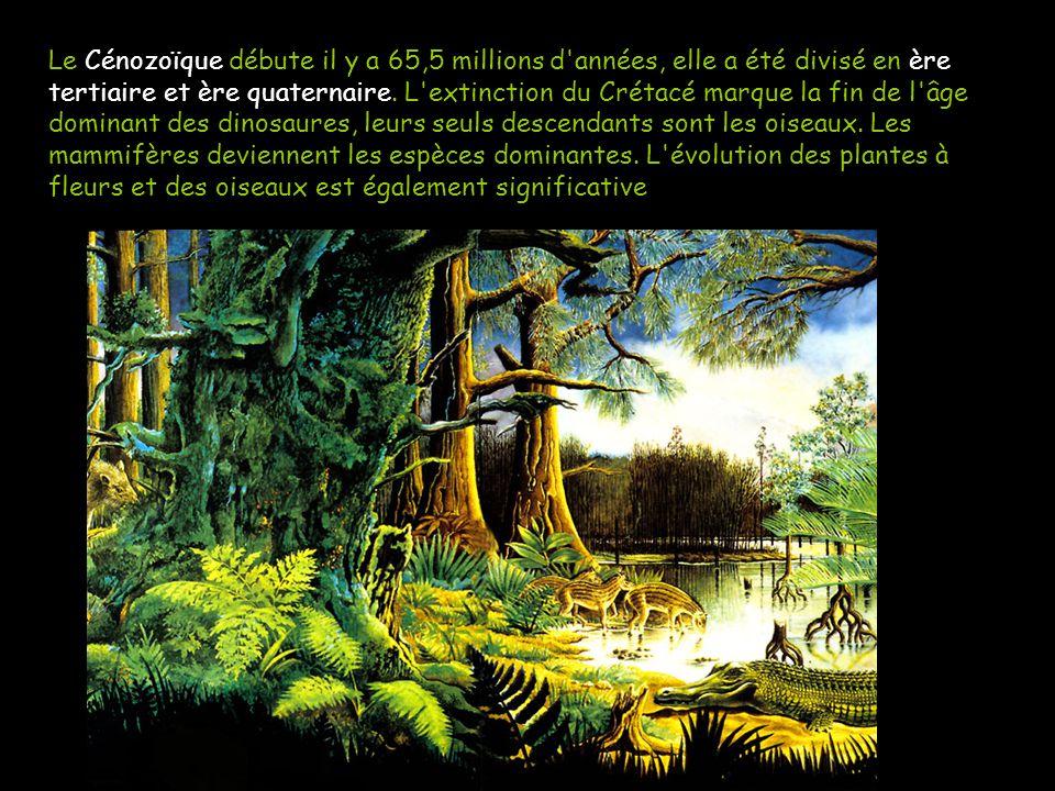 Le Cénozoïque est l'ère géologique actuelle Le Cénozoïque débute il y a 65,5 millions d'années, elle a été divisé en ère tertiaire et ère quaternaire.