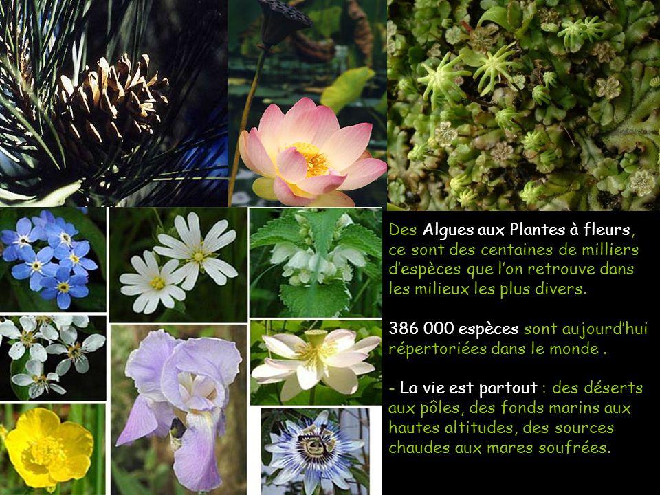 Des Algues aux Plantes à fleurs, ce sont des centaines de milliers despèces que lon retrouve dans les milieux les plus divers. 386 000 espèces sont au