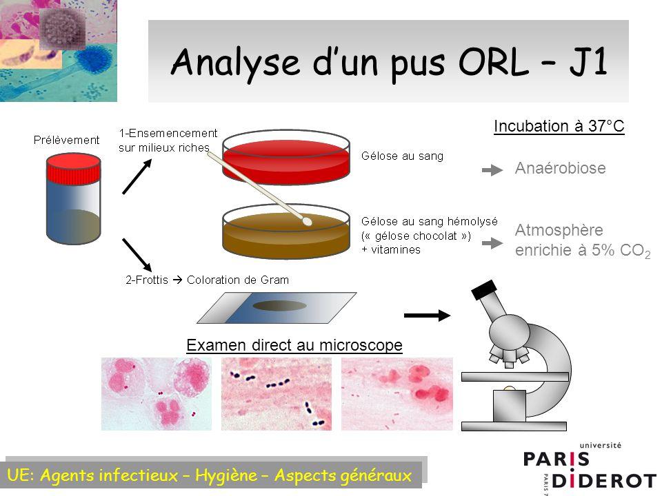 UE: Agents infectieux – Hygiène – Aspects généraux Analyse dun pus ORL – J1 Examen direct au microscope Anaérobiose Atmosphère enrichie à 5% CO 2 Incubation à 37°C