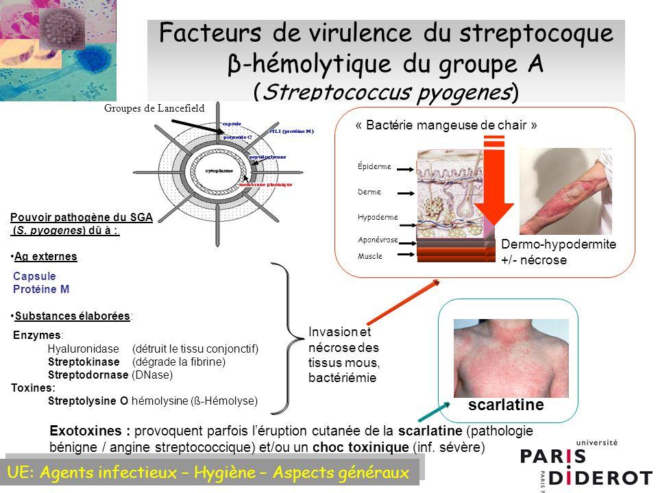 UE: Agents infectieux – Hygiène – Aspects généraux Facteurs de virulence du streptocoque β-hémolytique du groupe A (Streptococcus pyogenes) Invasion et nécrose des tissus mous, bactériémie Dermo-hypodermite +/-nécrose Derme Hypoderme Aponévrose Muscle Épiderme «Bactérie mangeuse de chair» scarlatine Exotoxines : provoquent parfois léruption cutanée de la scarlatine (pathologie bénigne / angine streptococcique) et/ou un choc toxinique (inf.