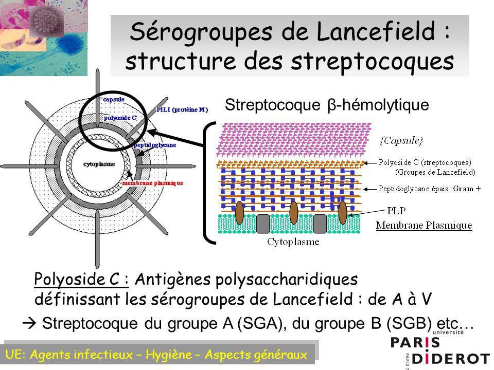 UE: Agents infectieux – Hygiène – Aspects généraux Sérogroupes de Lancefield : structure des streptocoques Polyoside C : Antigènes polysaccharidiques définissant les sérogroupes de Lancefield : de A à V Streptocoque du groupe A (SGA), du groupe B (SGB) etc… Streptocoque β-hémolytique