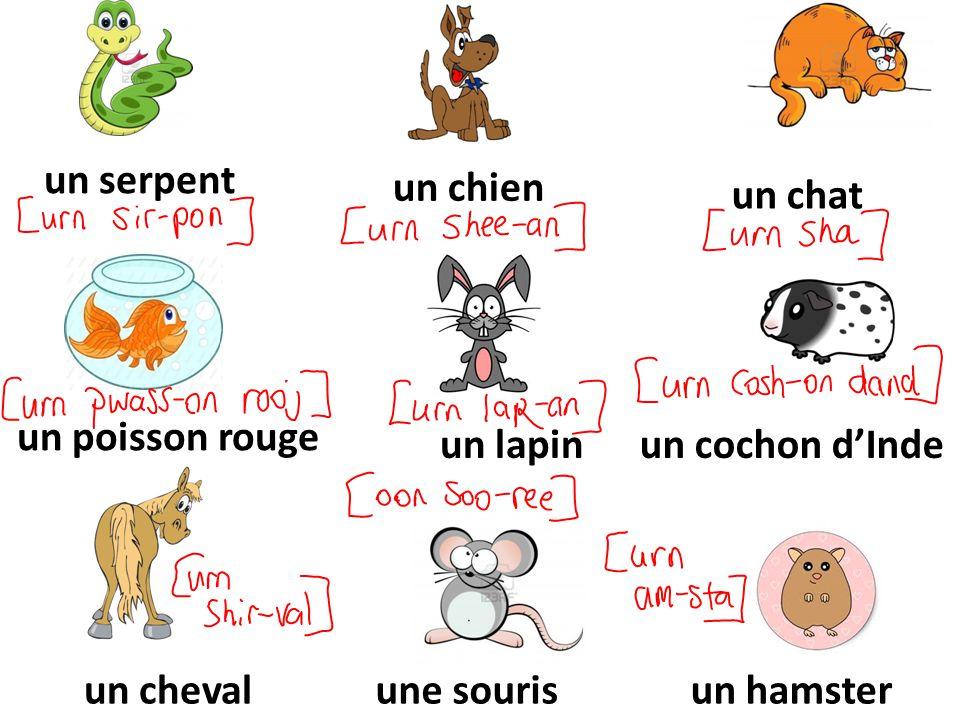 un serpent un chien un chat un poisson rouge un lapinun cochon dInde un chevalune sourisun hamster