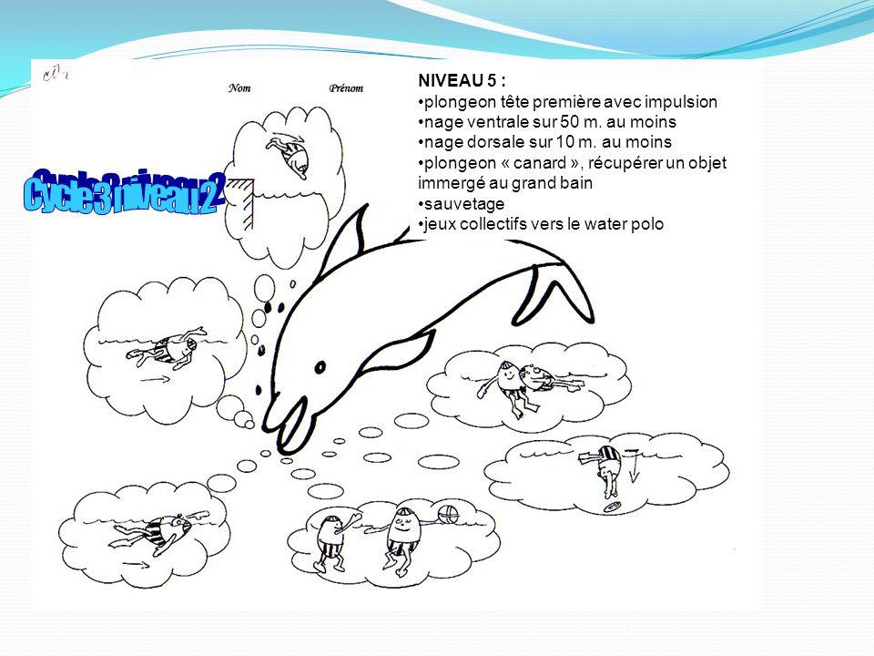 NIVEAU 5 : plongeon tête première avec impulsion nage ventrale sur 50 m.