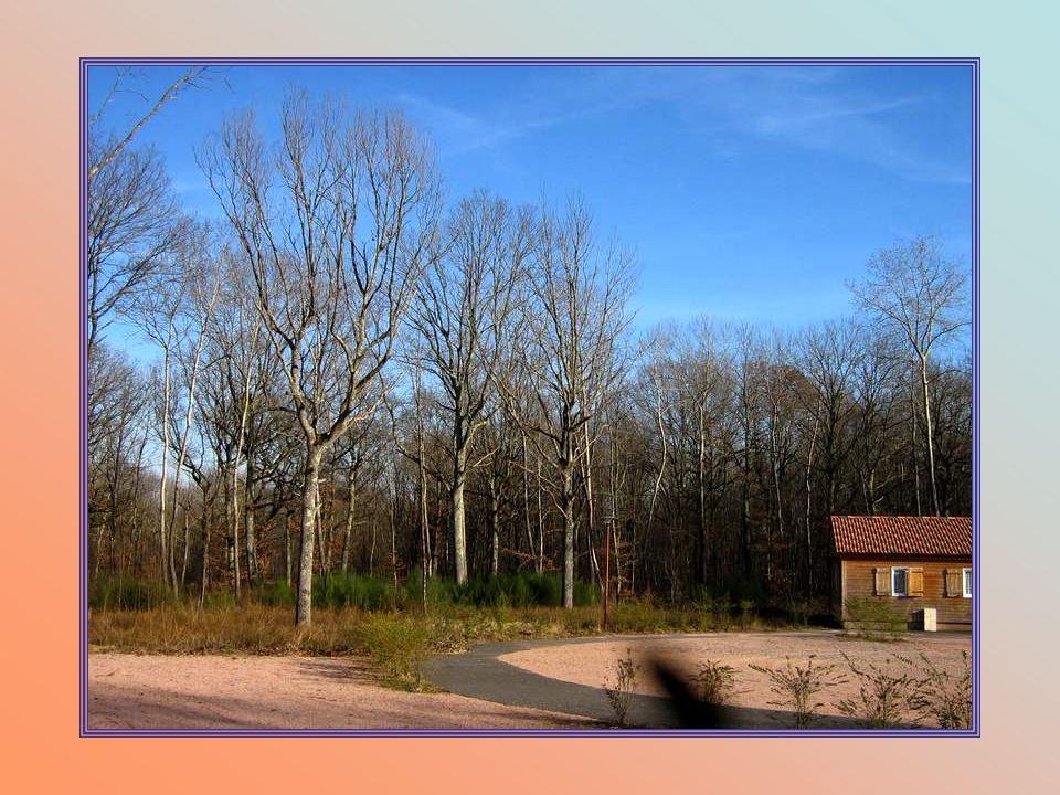 La forêt est autour du complexe, les biches et autres animaux, rodent le matin autour des chalets… Et chants doiseaux garantis !!!