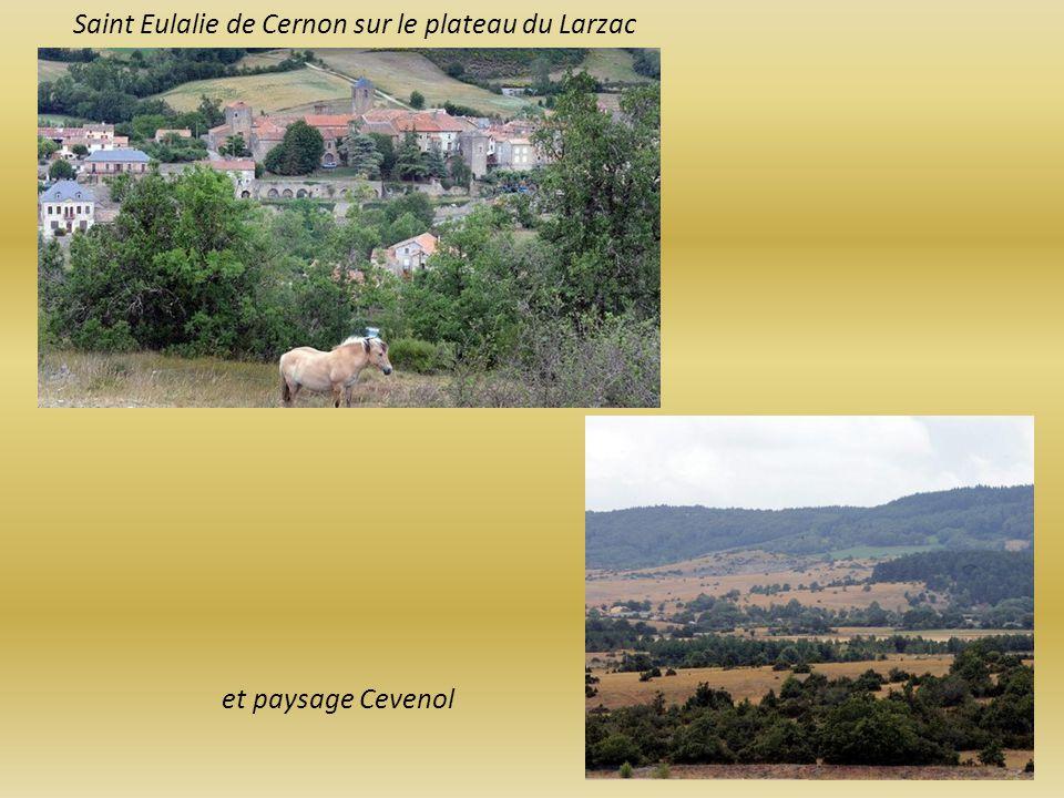 Pastoralisme dans les paysages des Causses ou Cévennes