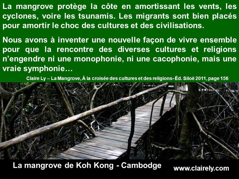 www.clairely.com La mangrove protège la côte en amortissant les vents, les cyclones, voire les tsunamis.