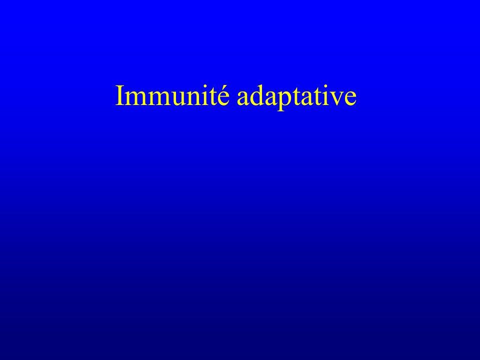 Multiples mécanismes de limmunodominance Compétition entre différents épitopes lors des différentes étapes de linduction dune réponse immunitaire En vaccinologie, les épitopes les plus « intéressants » ne sont pas nécessairement immunodominants