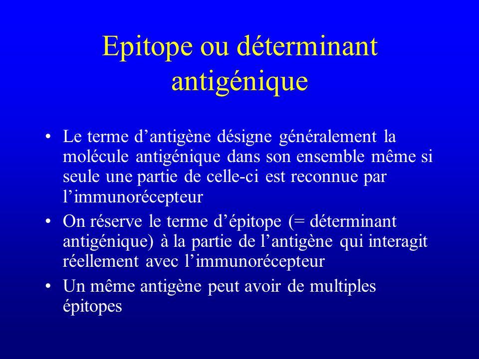 Epitope ou déterminant antigénique Le terme dantigène désigne généralement la molécule antigénique dans son ensemble même si seule une partie de celle-ci est reconnue par limmunorécepteur On réserve le terme dépitope (= déterminant antigénique) à la partie de lantigène qui interagit réellement avec limmunorécepteur Un même antigène peut avoir de multiples épitopes