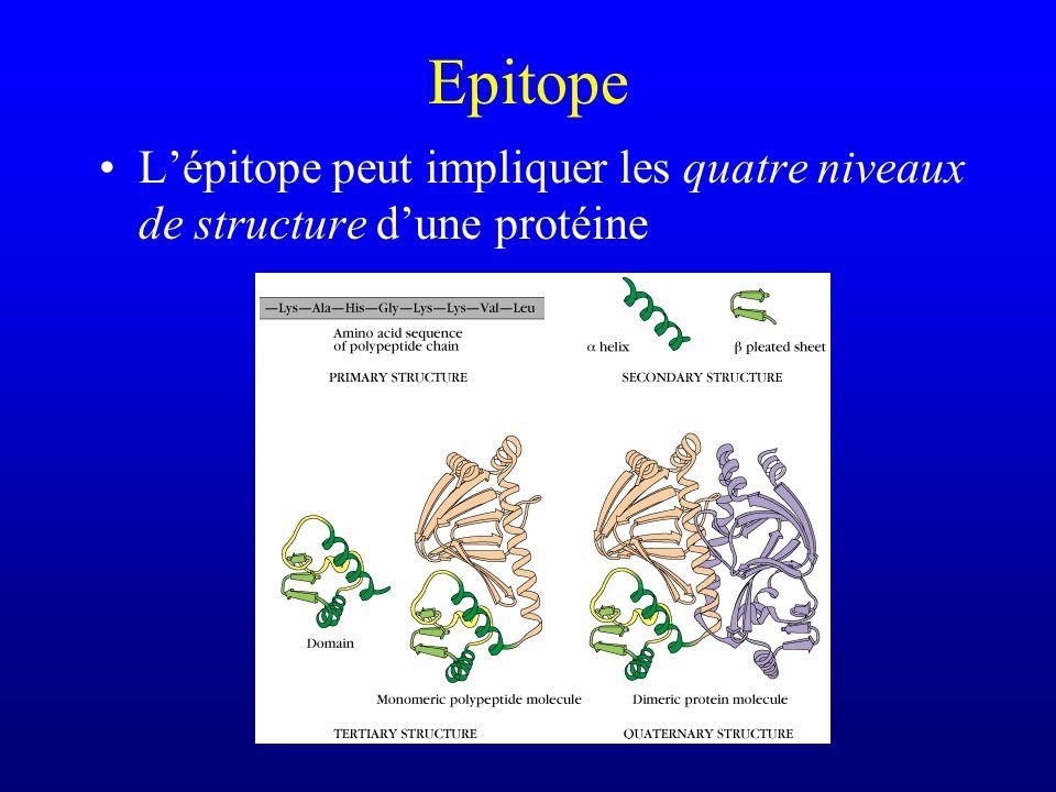 Epitope Lépitope peut impliquer les quatre niveaux de structure dune protéine