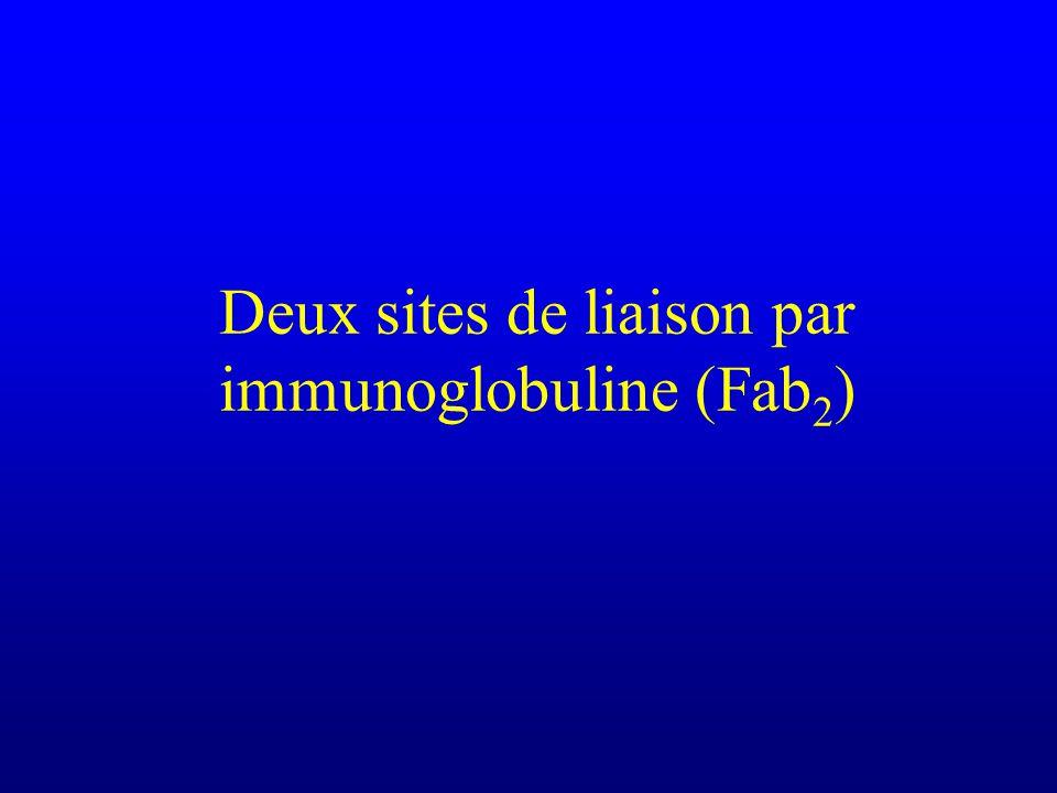Deux sites de liaison par immunoglobuline (Fab 2 )
