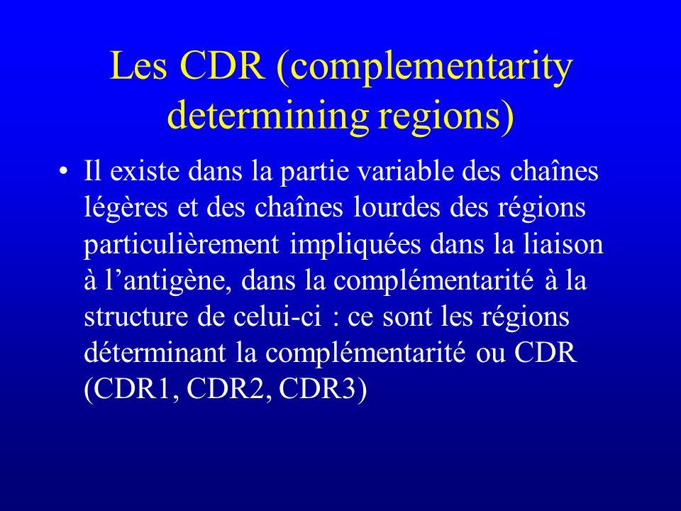 Les CDR (complementarity determining regions) Il existe dans la partie variable des chaînes légères et des chaînes lourdes des régions particulièrement impliquées dans la liaison à lantigène, dans la complémentarité à la structure de celui-ci : ce sont les régions déterminant la complémentarité ou CDR (CDR1, CDR2, CDR3)