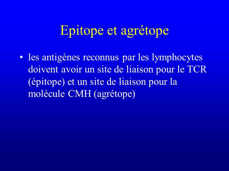 Epitope et agrétope les antigènes reconnus par les lymphocytes doivent avoir un site de liaison pour le TCR (épitope) et un site de liaison pour la molécule CMH (agrétope)