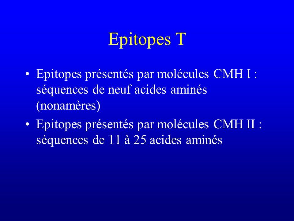 Epitopes T Epitopes présentés par molécules CMH I : séquences de neuf acides aminés (nonamères) Epitopes présentés par molécules CMH II : séquences de 11 à 25 acides aminés