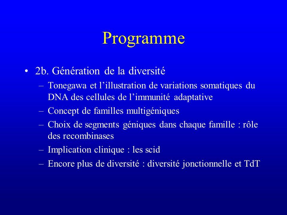 Epitopes séquentiels et non séquentiels Epitopes séquentiels : reconnaissance dune séquence dacides aminés (qui se suivent sur la protéine), indépendemment de la structure tertiaire du segment considéré –les anticorps dirigés contre des épitopes séquentiels les reconnaîtront même si la protéine native est dénaturée