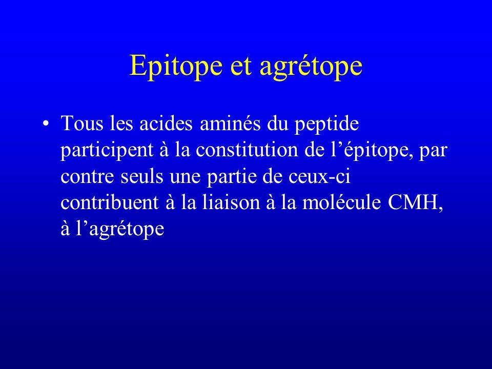 Epitope et agrétope Tous les acides aminés du peptide participent à la constitution de lépitope, par contre seuls une partie de ceux-ci contribuent à la liaison à la molécule CMH, à lagrétope