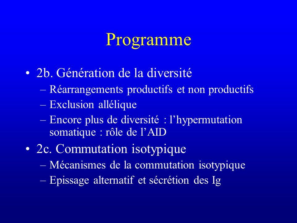 Hypermutation somatique Processus qui touche le produit fini du réarrangement génique 1mutation/1000 bases par division cellulaire soit 10 5 fois plus que dans les autres gènes Généralement substitutions (plutôt que délétions)