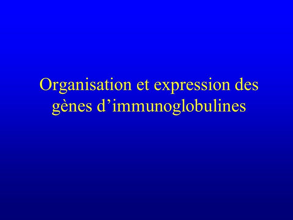 Organisation et expression des gènes dimmunoglobulines