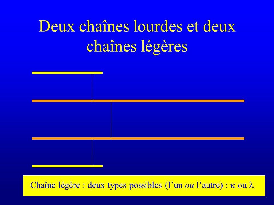 Deux chaînes lourdes et deux chaînes légères Chaîne légère : deux types possibles (lun ou lautre) : ou