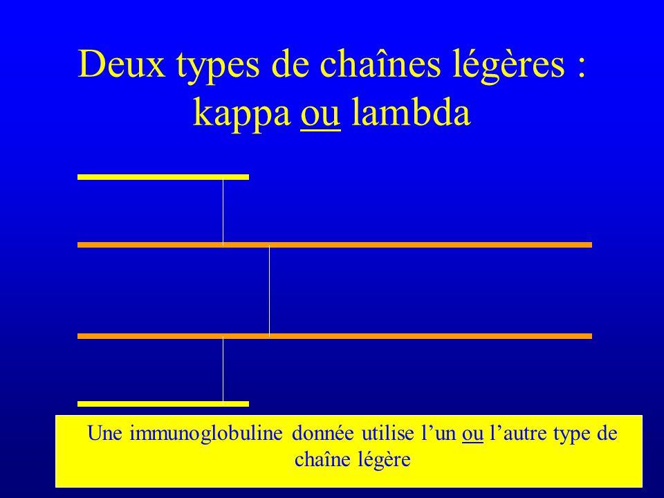 Deux types de chaînes légères : kappa ou lambda Une immunoglobuline donnée utilise lun ou lautre type de chaîne légère
