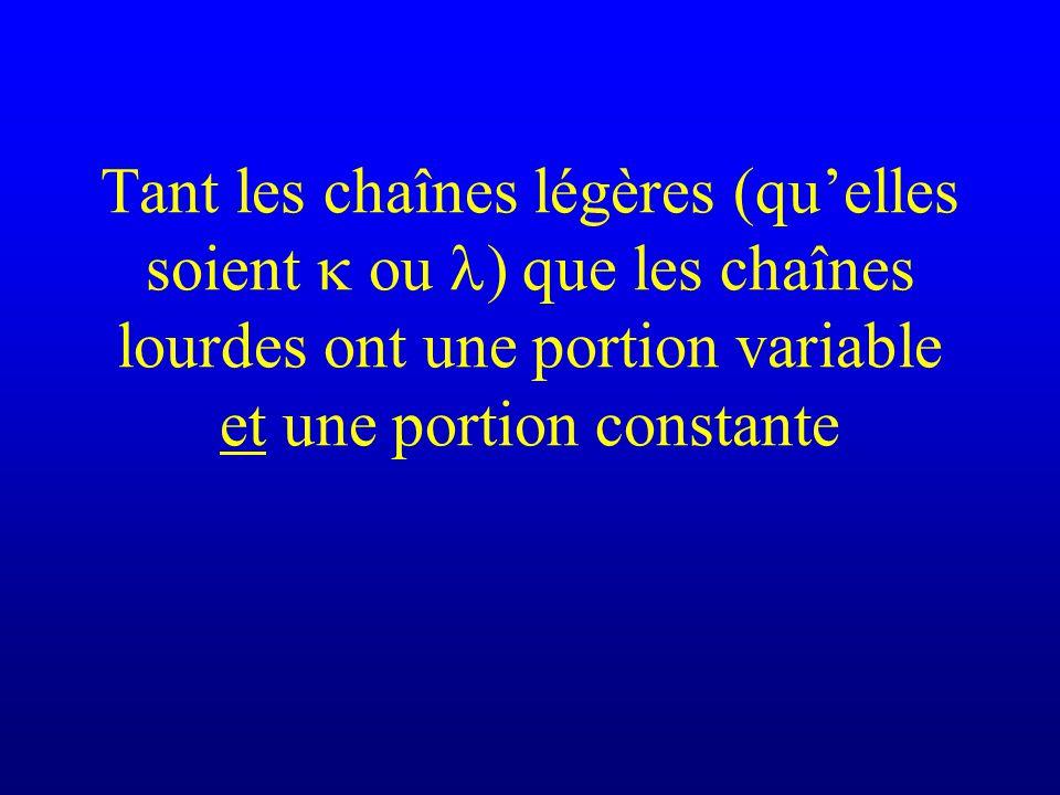 Tant les chaînes légères (quelles soient ou ) que les chaînes lourdes ont une portion variable et une portion constante
