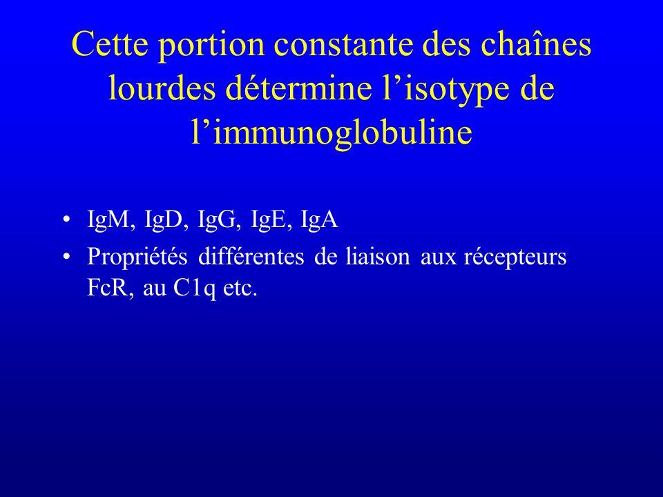 Cette portion constante des chaînes lourdes détermine lisotype de limmunoglobuline IgM, IgD, IgG, IgE, IgA Propriétés différentes de liaison aux récepteurs FcR, au C1q etc.