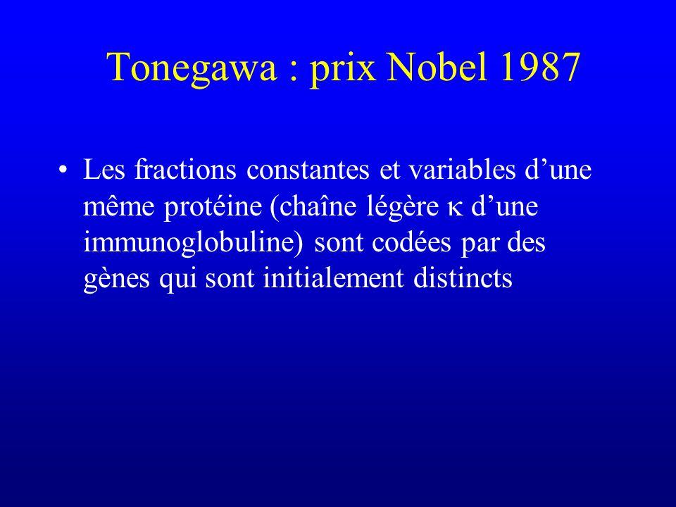 Tonegawa : prix Nobel 1987 Les fractions constantes et variables dune même protéine (chaîne légère dune immunoglobuline) sont codées par des gènes qui sont initialement distincts