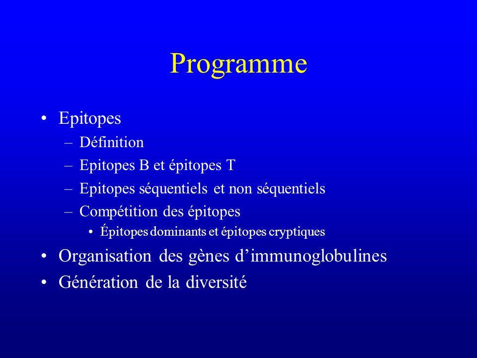 Programme Epitopes –Définition –Epitopes B et épitopes T –Epitopes séquentiels et non séquentiels –Compétition des épitopes Épitopes dominants et épitopes cryptiques Organisation des gènes dimmunoglobulines Génération de la diversité