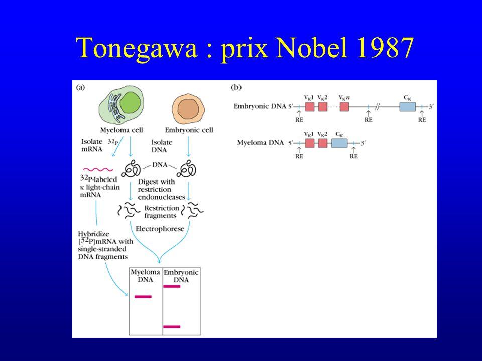 Tonegawa : prix Nobel 1987